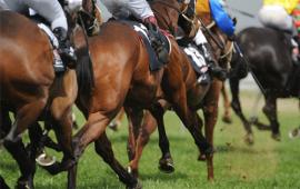 horseracing_post3