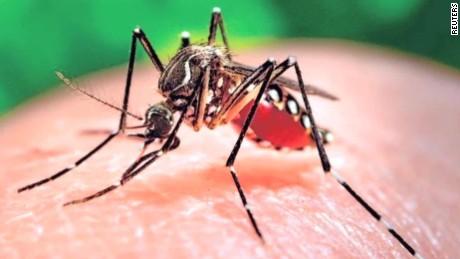 zike mosquito
